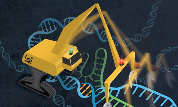 CRISPR in action